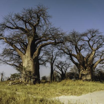 Circuit au Botswana : Les Déserts du Botswana