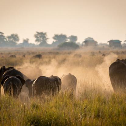 Voyage au Botswana - Au royaume des Elephants