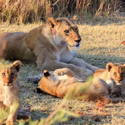 Circuit au Botswana - Au royaume des Elephants