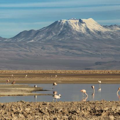 Circuit au Chili : Hauts plateaux et constellations d'étoiles