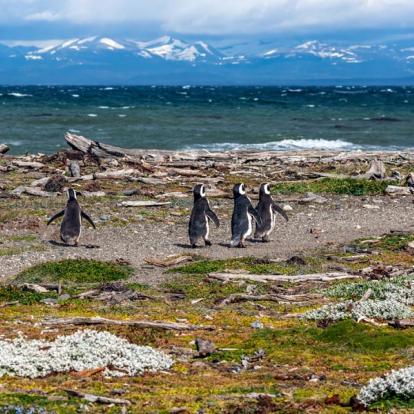 Voyage au Chili : Trek du W - Torres del Paine