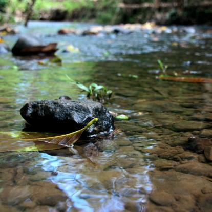 Voyage en Colombie: A la Découverte des Llanos et du Darien