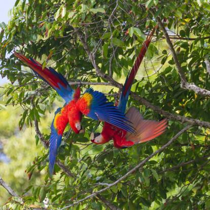 Voyage au Costa Rica : Faune et Flore