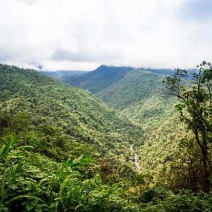 Circuit au Costa Rica : Faune et Flore