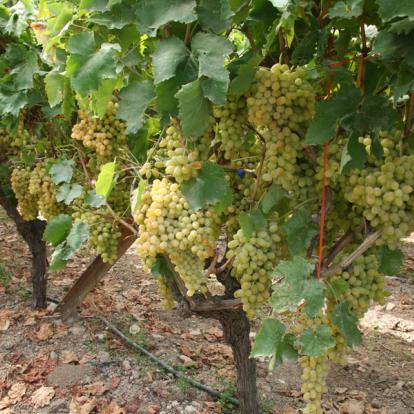 Voyage en Crète - La Route des Vins Crétois