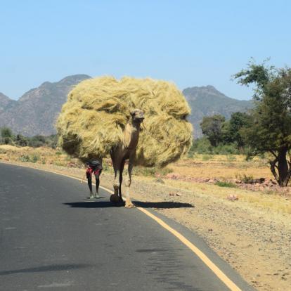 Circuit en Ethiopie : Les Volcans du Erta Ale et le Dallol