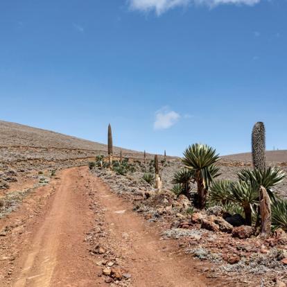 Circuit en Ethiopie : Périple dans la Vallée de l'Omo