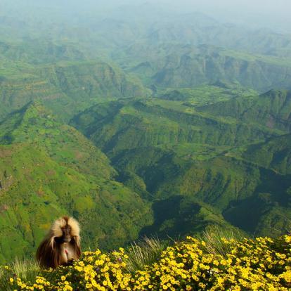Voyage en Ethiopie : Timket Festival à Gondar et Route Historique