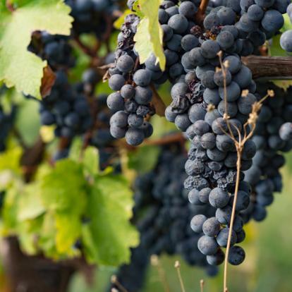 Circuit en Géorgie : La Route des Vins