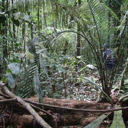 Circuit en Guyane : Séjour « Nature pour Tous en Famille »