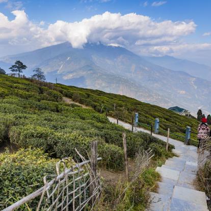Voyage en Inde et au Bhoutan: Des Plantations de Thé à la Terre du Dragon