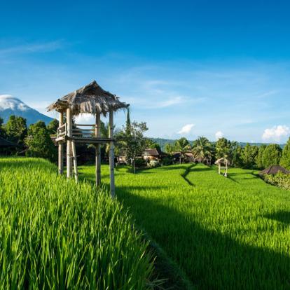 Voyage en Indonésie : Bali, l'ile aux mille saveurs