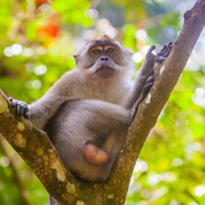 Voyage en Indonésie - Sumatra, Ourangs-Outans et Peuple Batak
