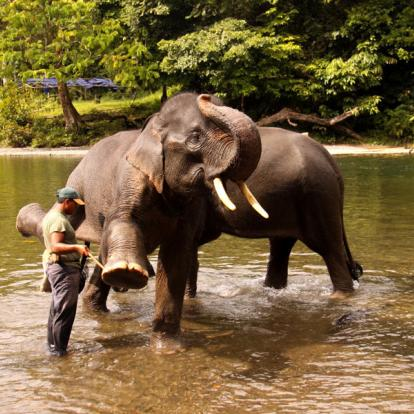 Voyage en Indonésie : Sumatra, Ourangs-Outans et Peuple Batak