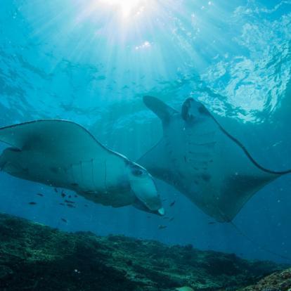 Séjour en Indonésie : Escapade Plongée à Bali