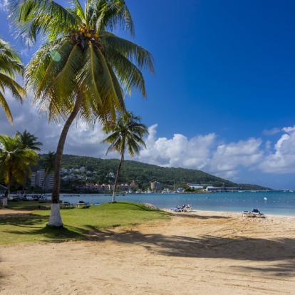 Voyage en Jamaïque : Jamaican Roots