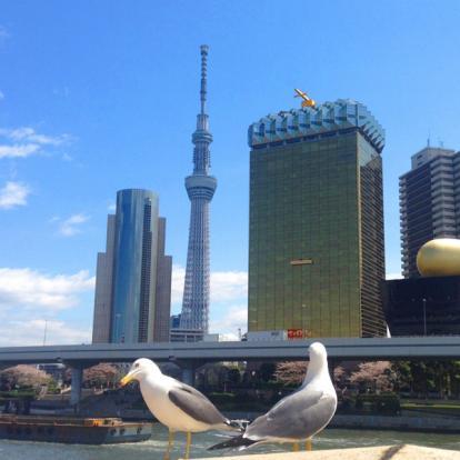 Visite de Tokyo : D'Asakusa à Shinjuku