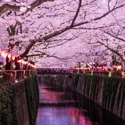Voyage au Japon : Le Temps des Cerisiers
