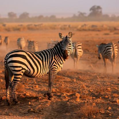 Voyage au Kenya : A la découverte des Parcs Kenyans