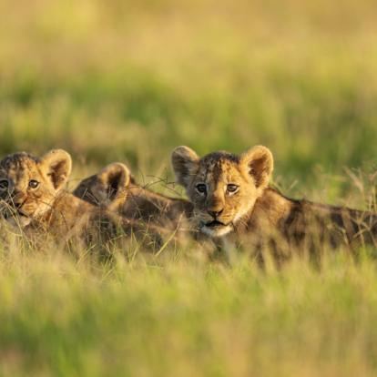 Safaris au Kenya : Escapade Kenyanne
