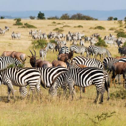 Kenya : La Vallée du Rift, Menengai,Aberdares et Masai Mara