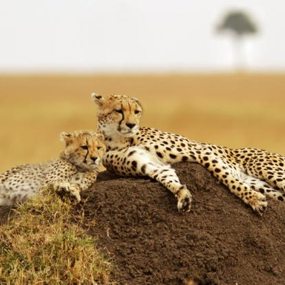 Voyage au Kenya : La Vallée du Rift, Menengai,Aberdares et Masai Mara