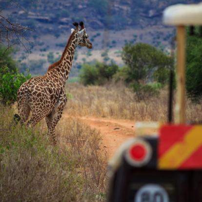 Séjour au Kenya : Safari et Plage