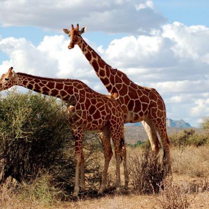 Voyage au Kenya : Safari dans le Nord Kenya