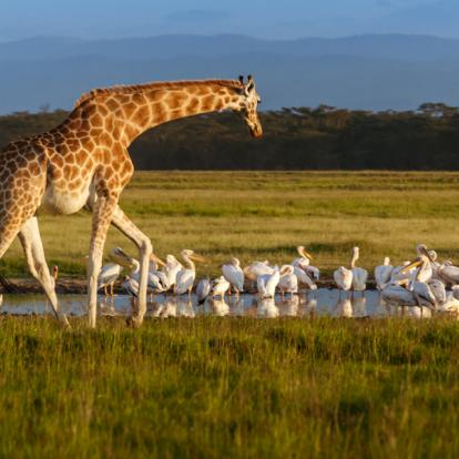 Voyage au Kenya : La Vallée du Rift et Masai Mara