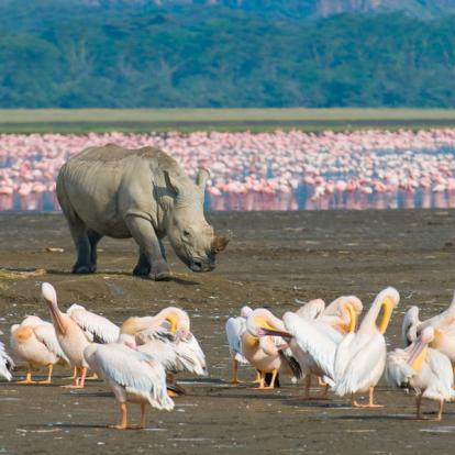 Voyage au Kenya : Trekking et Safaris