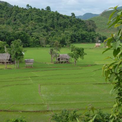 Voyage au Laos : Peuples et Merveilles du Nord