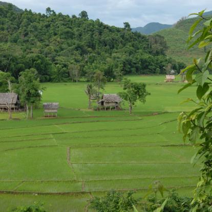 Circuit du Nord au Sud : L'Essentiel du Laos