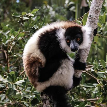Voyage à Madagascar: L'Est Tropical