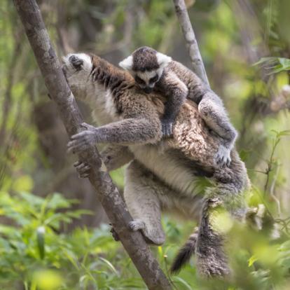 Voyage à Madagascar: Le Sud Classique