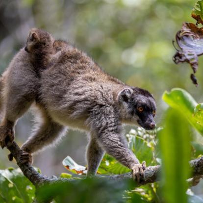 Voyage à Madagascar: Le Trekking de l'Est