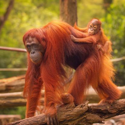 Voyage en Malaisie : Entre Paradis Vert & Mer Turquoise de Borneo