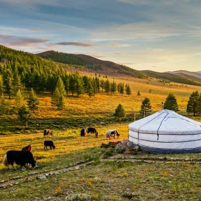Circuit en Mongolie : Désert de Gobi et Trek dans le Naiman Nuur-Khovsgol