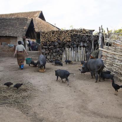 Voyage en Birmanie : Trekking au Triangle d'or et ses Multiples Ethnies