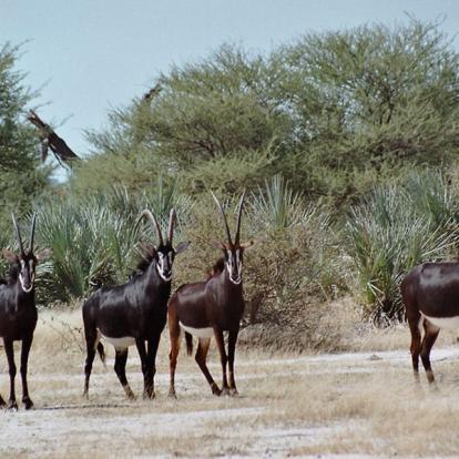 Circuit en Namibie : Caprivi, Du Kalahari aux Chutes Victoria
