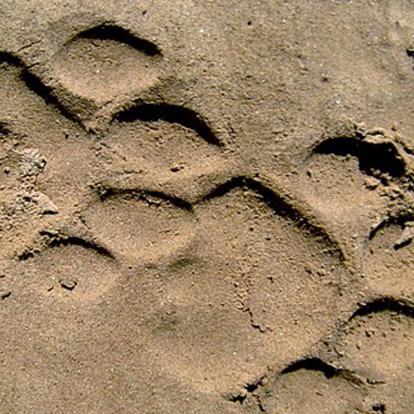 Safari en Namibie : Les Rivières Ephémères