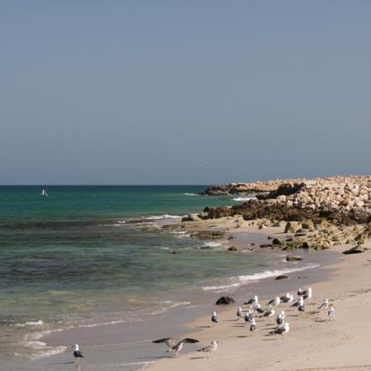 Voyage à Oman : Du Jebel Akhdar à la Mer