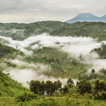 Voyage en Ouganda : Aventures en Ouganda