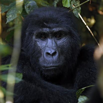 Voyage en Ouganda : La Perle de l'Afrique