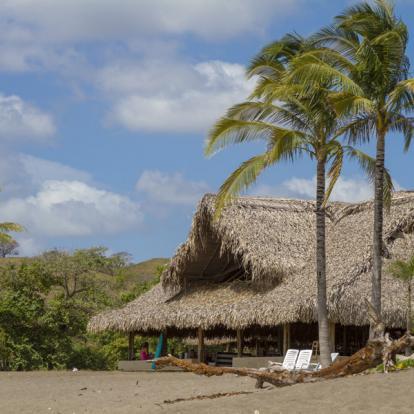 Circuit au Panama : Cétacés, Miracle de la Nature au Pacifique