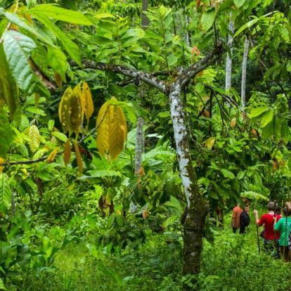 Circuit au Panama : Montagnes, Cacao Et Pilotis