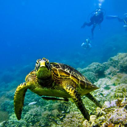 Voyage aux Philippines - Autour de la Mer dans les Visayas