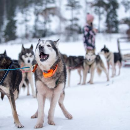 Voyage en Russie : 100 km en Traîneau à Huskies en Carélie
