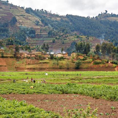Voyage au Rwanda : Immersion au Pays du Gorille