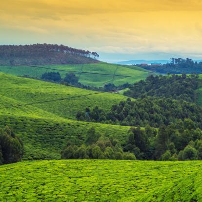 Circuit au Rwanda : Le Pays des Mille Collines