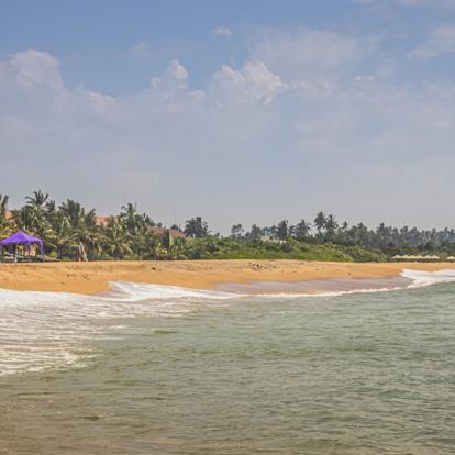 Circuit au Sri Lanka : Découverte et Plages